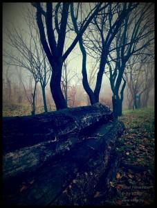 Rural november